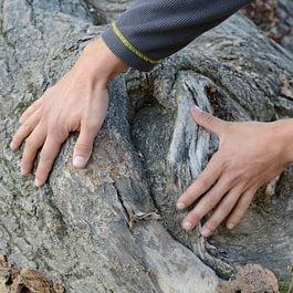 Nous existons pour sauver les arbres