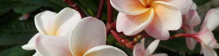 Ab zu Waibel Blumen