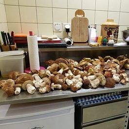 I nostri funghi porcini locali