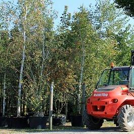 Grosse Bäume sind unsere Spezialität