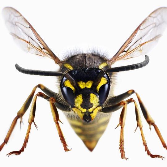 ABC-Insekt