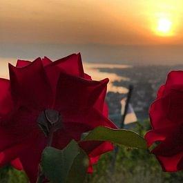 Roses de Lavaux