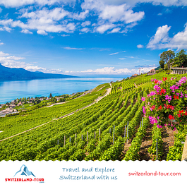 Lavaux Vineyards on a private day trip from Geneva with Switzerland Tour