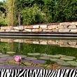 Schwimmteich von ZEBRA AG GARTEN & POOL