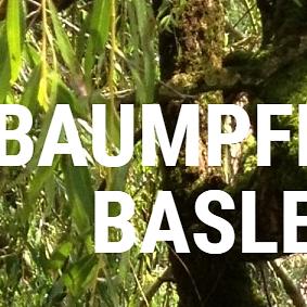 Baumpflege Basler