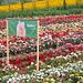 Herter Baumschule und Rosen