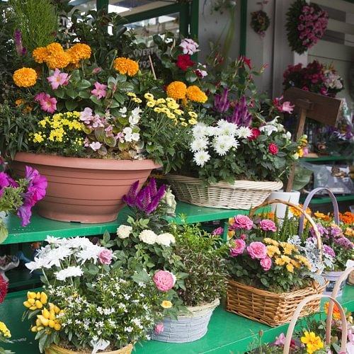 Plantes et fleurs - A. Pinto Fleurs - Petit-Lancy