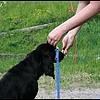 Dog Academy