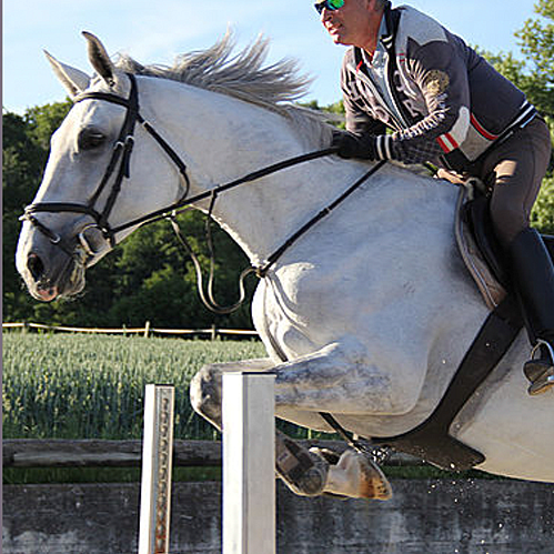 pension pour chevaux Lossy