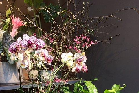 Ihr First-Class Blumengeschäft in Aarau!