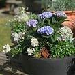 Pflanzen für Aussenbereich