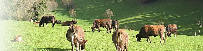 Bergmattenhof