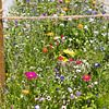 Rabattenbegrünung Naturwiese