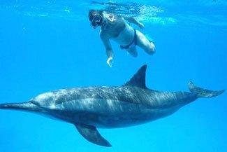 Delfin,-Schiffreisen in Südägypten