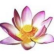 Lotus Thai-Massage