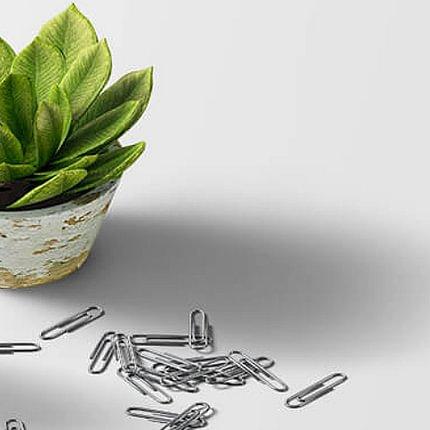 Feng Shui im Business, Zuhause und Gartenräume der Kraft