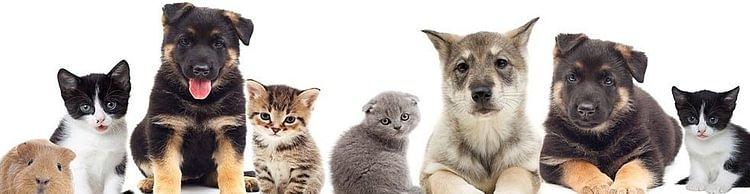 Dr. med. vet. Animal House-Kleintierpraxis