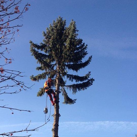 Triage forestier Sierre Noble-Contrée