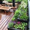 Bienenweiden auch auf der Terrasse. Bienen stören den Menschen nicht beim Essen oder trinken