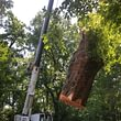Les Artisans de L'Arbre Sarl a les compétences pour abattre des arbres de toutes tailles en toutes situations