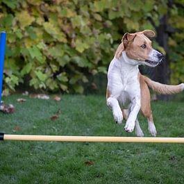 Teamarbeit Mensch Hund
