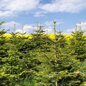 'Bei uns ist das ganze Jahr Weihnachten' - Willi Mathys, Agroservice