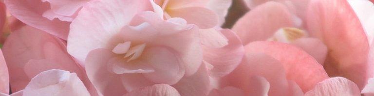 Guichard Fleurs