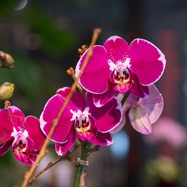 Au Bouquet Basel - Eine grosse Auswahl an Orchideen