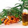 Jojoba Gold Suisse - Argousier huile de graines BIO CO2 extrait