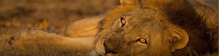 Safaris à la Carte