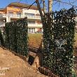 panneaux de lierres prêt à planter effet immédiat