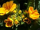 Bärtschi Blumen Pflanzen Floristik