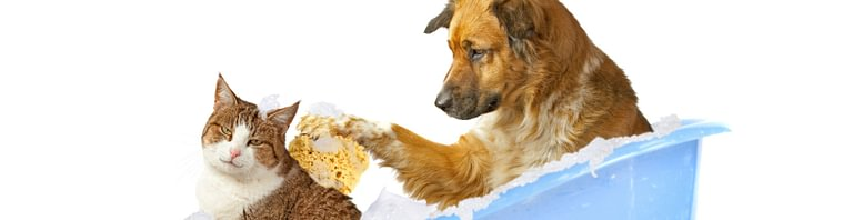 Salone per Cani e Gatti