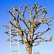 Happytree Baumpflege Lenzin