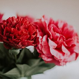 Une maitrise parfaite de la chine de conservation des fleurs