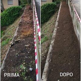 Estirpazione siepe e preparazione terreno per l'impianto di una nuova - Giardini ArteVerde Sagl