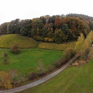 Das Weingut Irsslinger in Wangen SZ auf einen Blick.