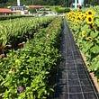 Blumenfelder zum selber schneiden