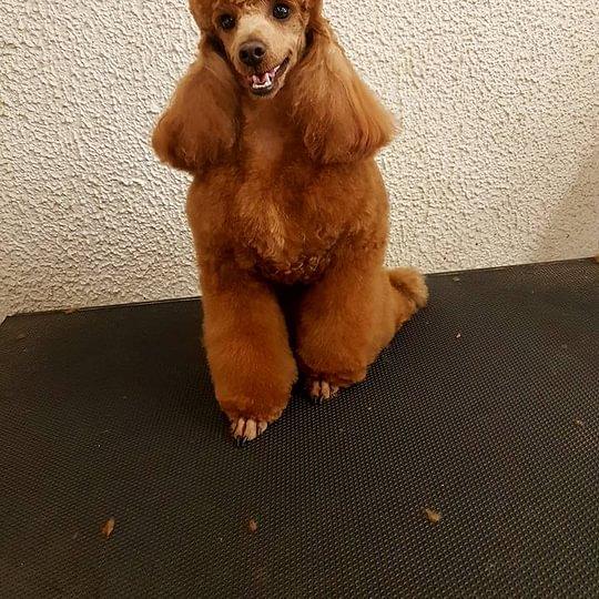 La Vigie Dog Saloon