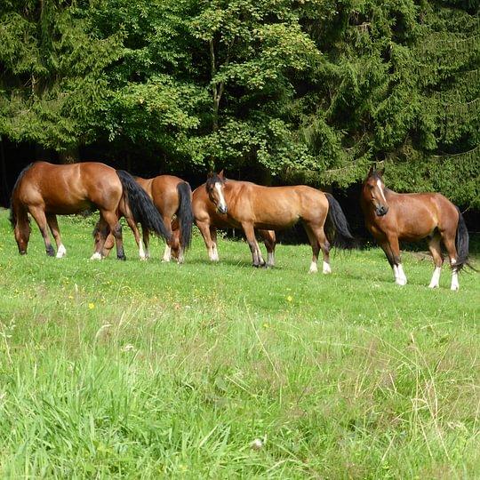 Pferdepension auf Biobetrieb