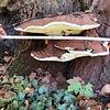 Analyse de champignon et foyer de pourriture dans l'arbre