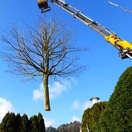 Kranarbeit mit einem Baum