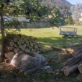 legna da ardere bianchetto sagl