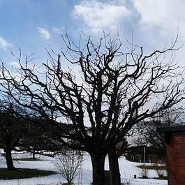 Obstbaumpflege nacher