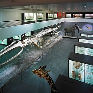 Naturhistorisches Museum Bern