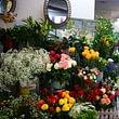 Notre choix de fleurs nouvelle arrivages chaque jours