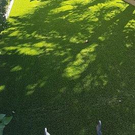 Giardino privato a Grono