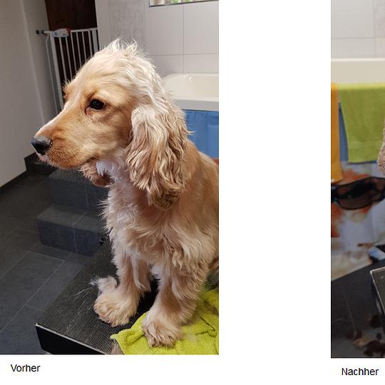 Hundesalon Honey, Engishofen - vorher/nachher