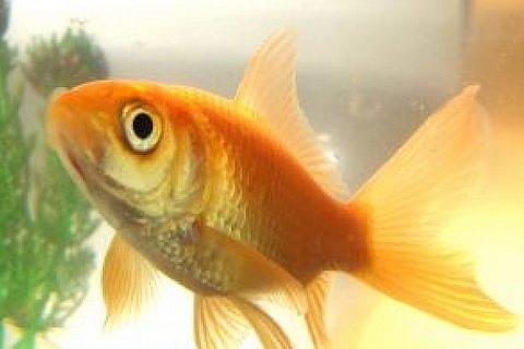 Tierbetreuung / Aquarienfische
