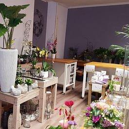 Joli choix de plantes et contenants